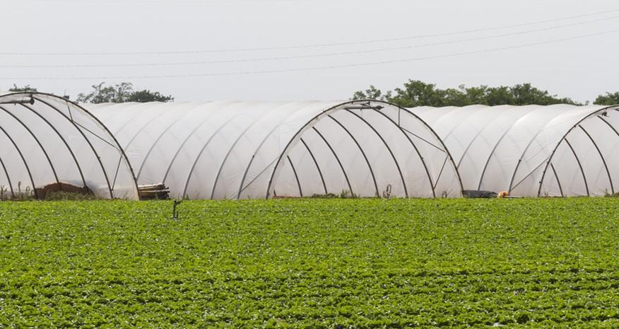نایلون در کشاورزی