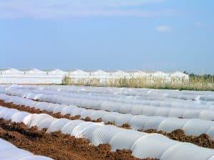 نایلون کشاورزی سفید